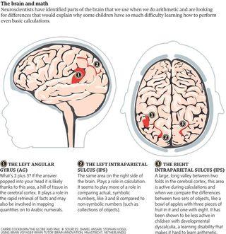Brain-math-750_1128404a