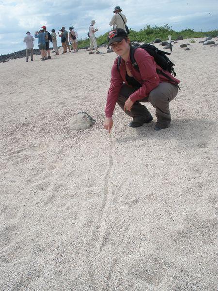 AJDL_land_iguana_tracks_72