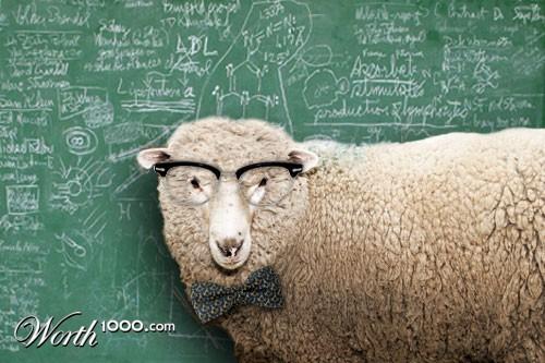 Professor_science_sheep