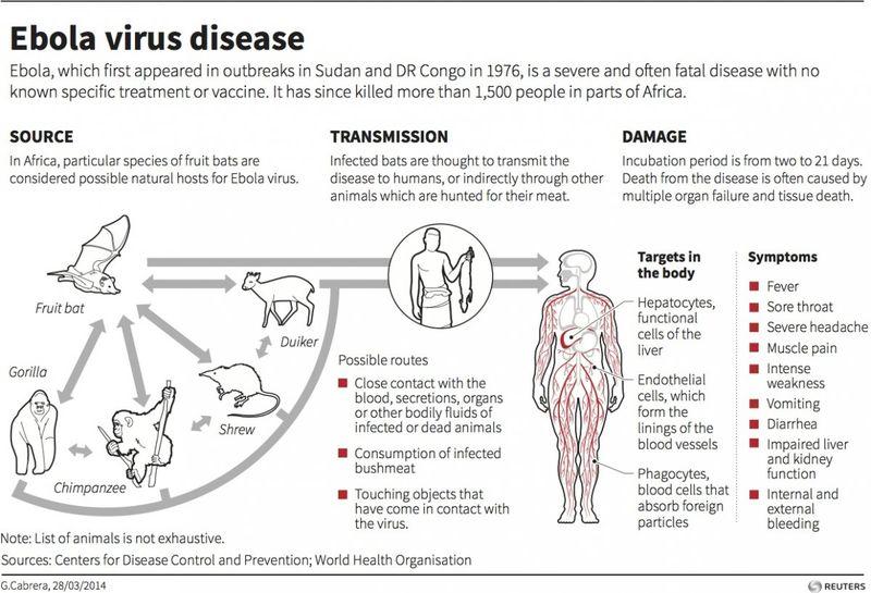 Ebola trasmission