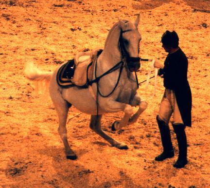 eighteenthcentury saddle