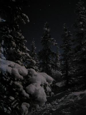 Moonlit_snowy_trees
