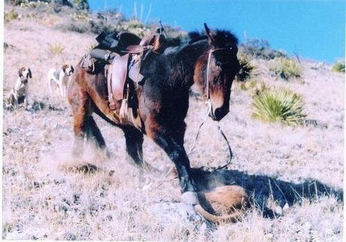 Mule_attacks_mountain_lion03