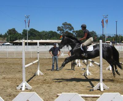Horse Jumping Gymnastics