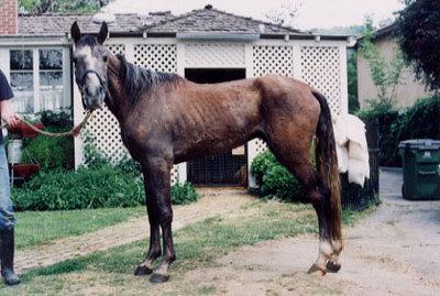 Eq601