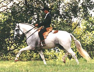 Luisitano_horse